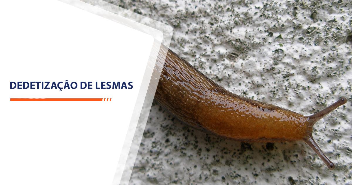 Dedetização de Lesmas