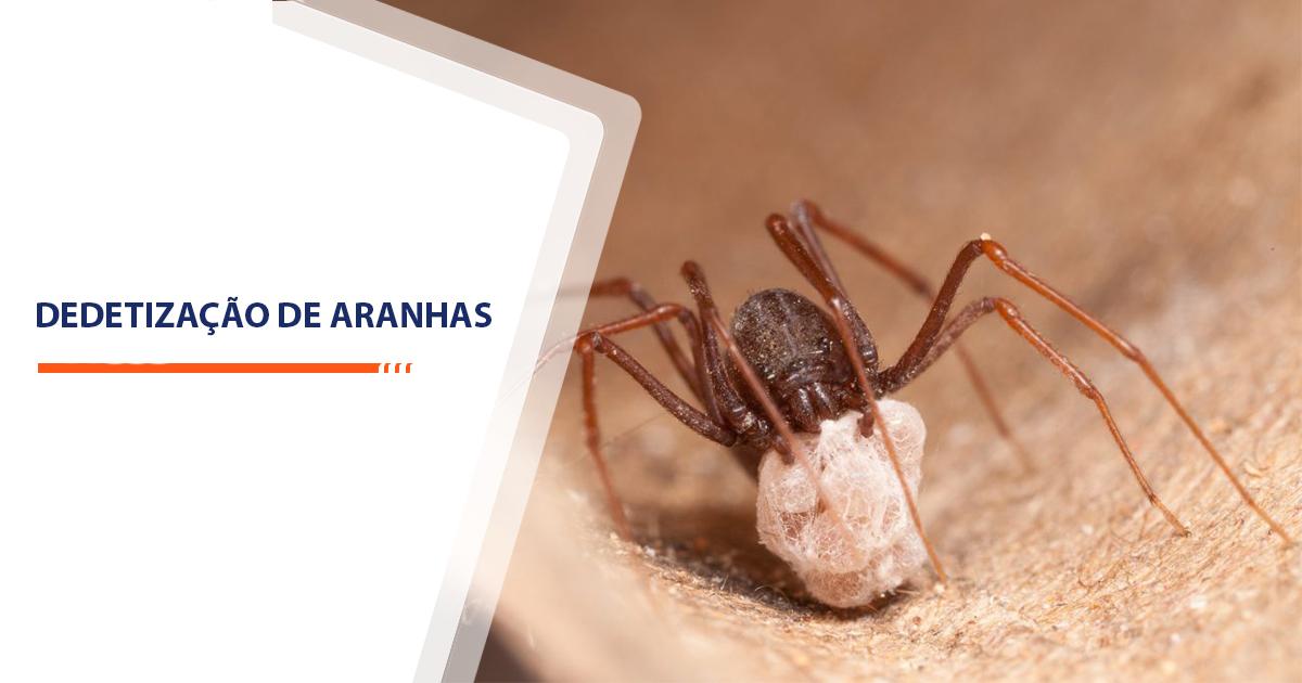 Dedetização de Aranhas Sorocaba