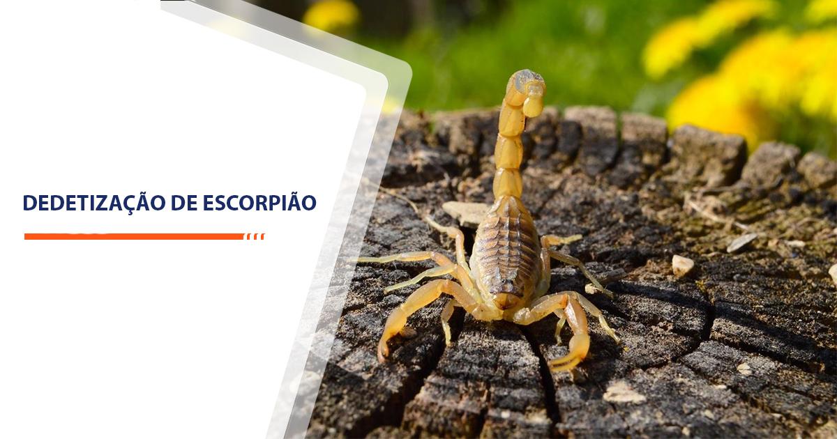 Dedetização de Escorpião Sorocaba