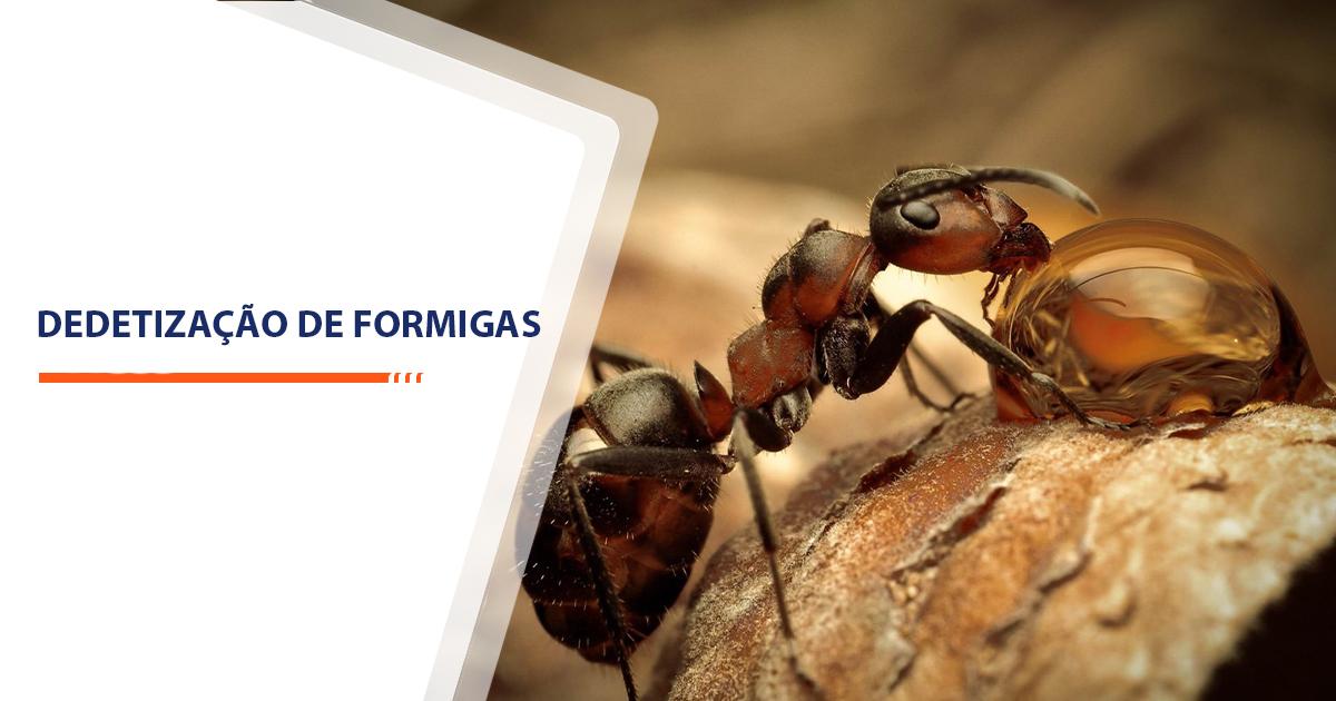 Dedetização de Formigas Sorocaba