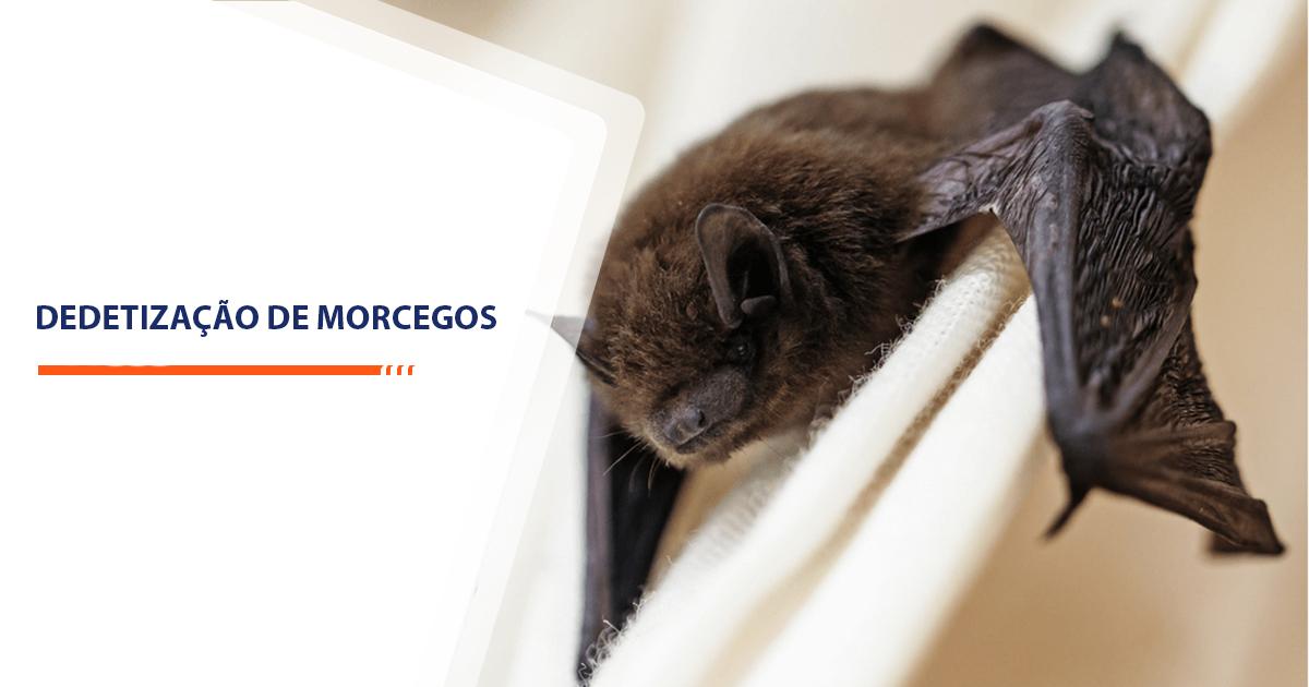 Dedetização de Morcegos Sorocaba