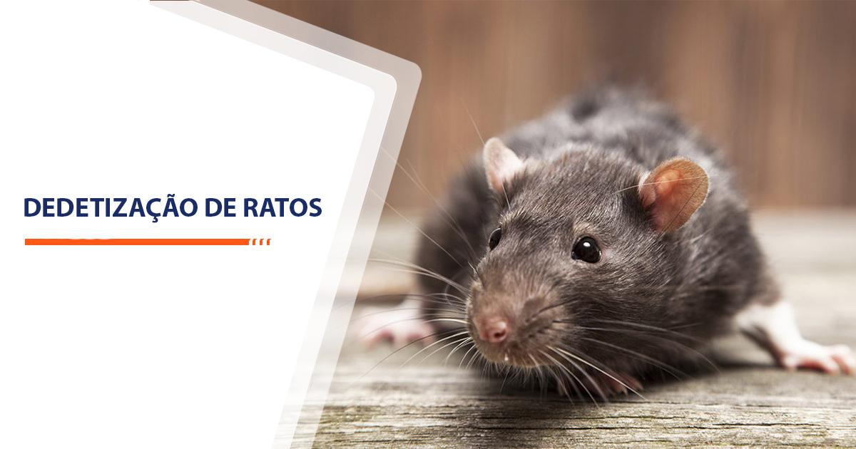 Dedetização de Ratos Sorocaba
